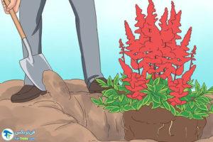 4 روش تکثیر گل آستیلب