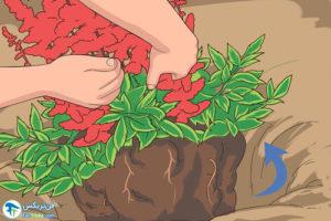 5 روش تکثیر گل آستیلب