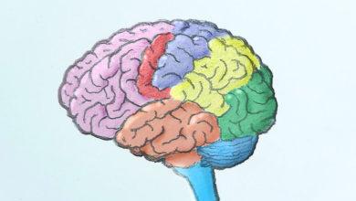 Photo of آموزش طراحی و نقاشی مغز انسان