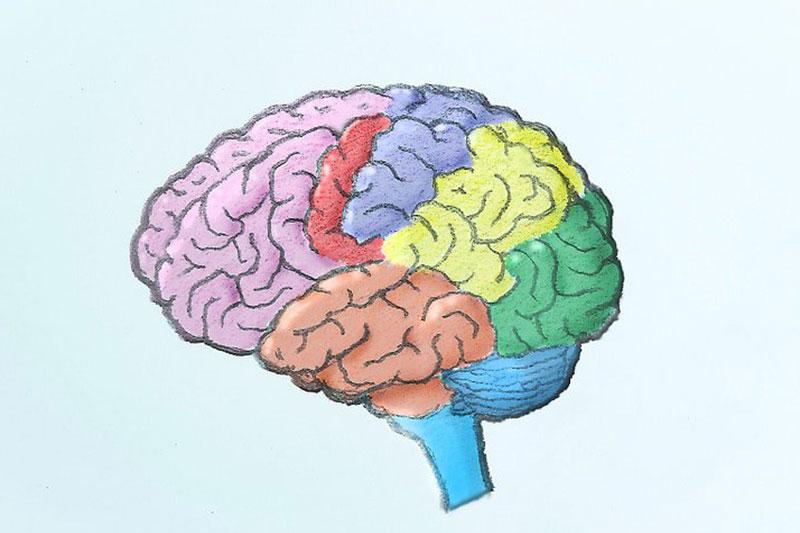 14 نحوه طراحی و کشیدن مغز انسان