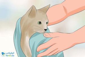 6 تمیز کردن موی گربهها
