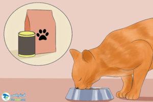 7 تمیز کردن موی گربهها