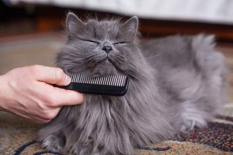 8 براق کردن موهای گربه