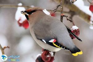 1 غذای مناسب پرندگان در فصل زمستان