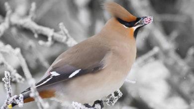 Photo of پرندگان در فصل زمستان چه می خورند؟