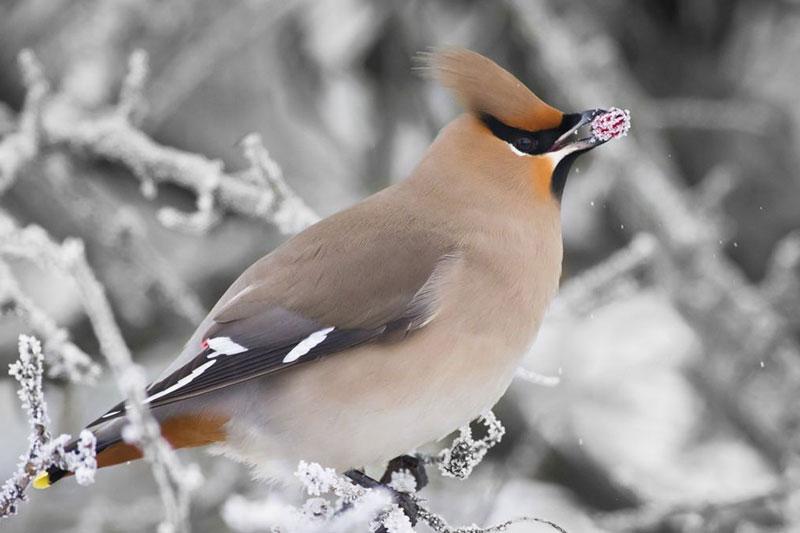 2 غذای مناسب پرندگان در فصل زمستان