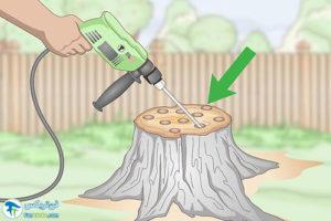 2 سوزاندن کنده درخت