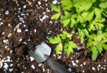 Photo of چگونه خودمان به خاک باغ و باغچه یا گلدان کلسیم اضافه کنیم؟